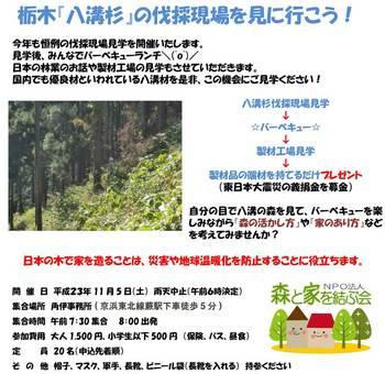 sinrin20111105b.jpg